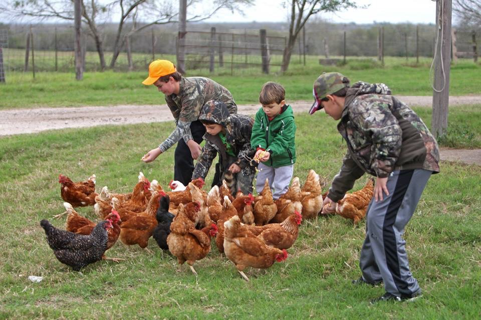 boys feeding chickens at Knolle Farm & Ranch