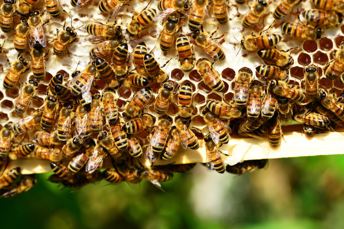 bees and a honey comb