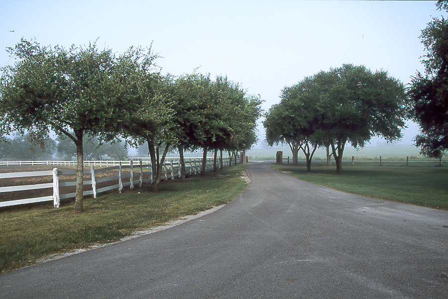 tree lined entrance to Knolle Farm & Ranch