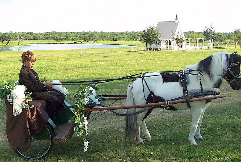 cart and pony decorated for wedding