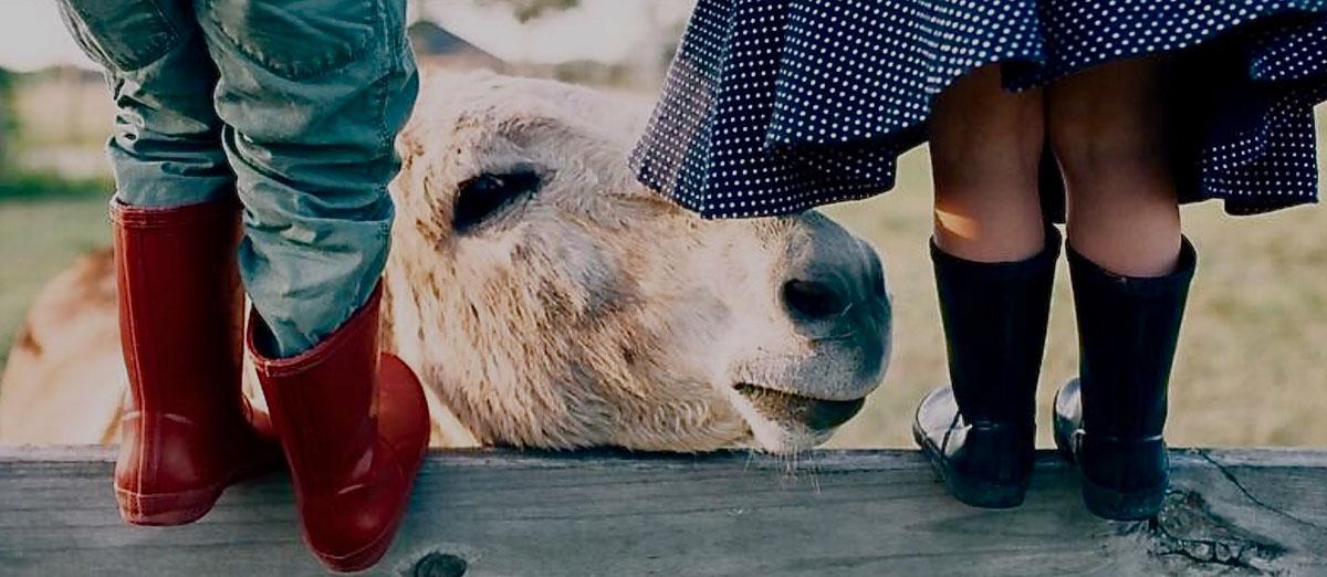 children in farm with donkey