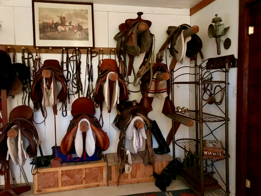 saddles on display in tack room