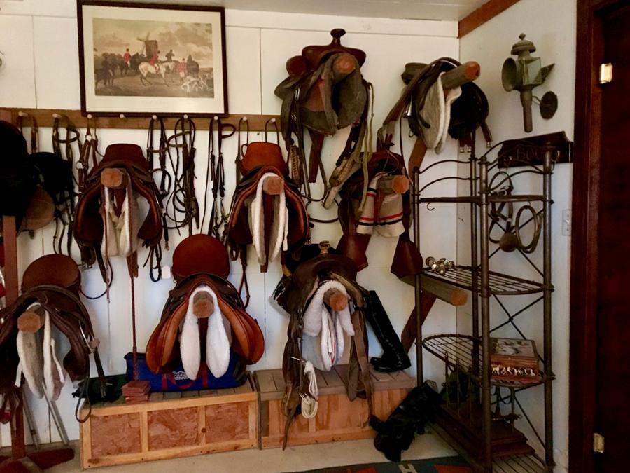 saddles on display in tack room